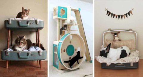 pet room ideas with play room