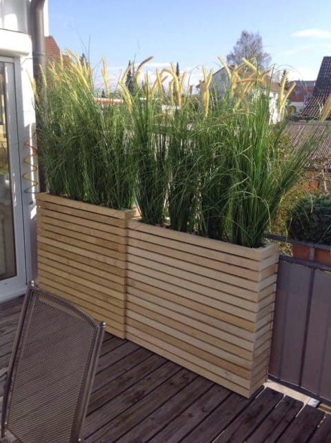 Privacy plants for small area