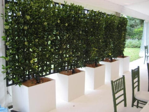 Privacy plants for white house