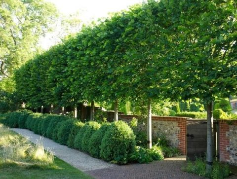 Privacy plants with different type